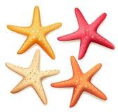Estrellas de mar coloridas realistas fijadas en el fondo blanco Fotos de archivo libres de regalías