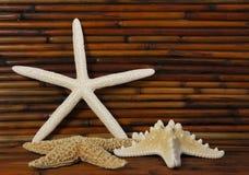 Estrellas de mar con el bambú en fondo Foto de archivo