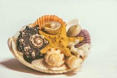 Estrellas de mar, conchas marinas aisladas en el fondo blanco imagen de archivo