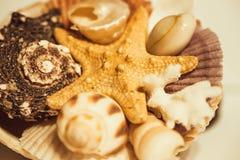 Estrellas de mar, conchas marinas aisladas en el fondo blanco fotos de archivo