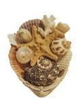 Estrellas de mar, conchas marinas aisladas en el fondo blanco Fotografía de archivo