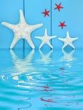 Estrellas de mar Creatues Imagen de archivo