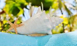 Estrellas de mar de la cáscara de la concha en la pared con aguamarina foto de archivo libre de regalías