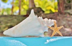 Estrellas de mar de la cáscara de la concha en la pared con aguamarina imagen de archivo libre de regalías