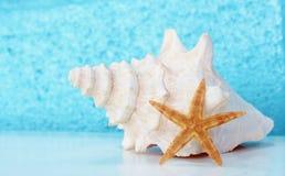 Estrellas de mar de la cáscara de la concha en la tabla con aguamarina imágenes de archivo libres de regalías
