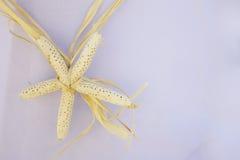 Estrellas de mar de la decoración de la boda, ceremonia de boda tropical Foto de archivo
