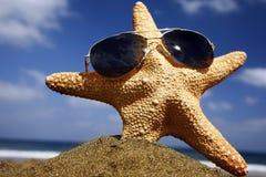 Estrellas de mar de la playa con las cortinas Imagen de archivo libre de regalías
