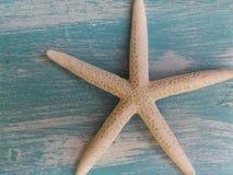 Estrellas de mar del silencio Imagen de archivo libre de regalías