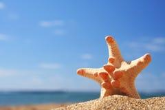 Estrellas de mar del verano imagenes de archivo