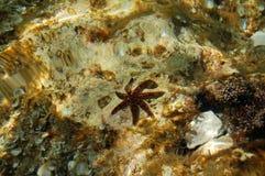 Estrellas de mar en agua Imágenes de archivo libres de regalías