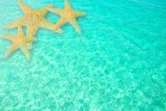 Estrellas de mar en agua clara del océano