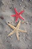 Estrellas de mar en arena Fotografía de archivo libre de regalías