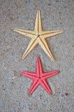 Estrellas de mar en arena Fotos de archivo