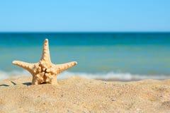 Estrellas de mar en arena en el lado de mar Foto de archivo libre de regalías