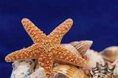 Estrellas de mar en azul Fotos de archivo