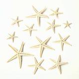 12 estrellas de mar en blanco Imagen de archivo