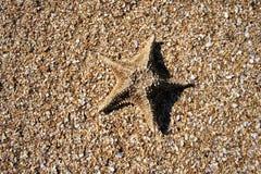 Estrellas de mar en cáscaras machacadas Fotos de archivo libres de regalías