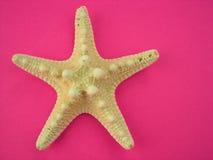 Estrellas de mar en color de rosa Imagen de archivo