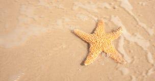 Estrellas de mar en el agua móvil del océano Fotografía de archivo
