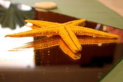 Estrellas de mar en el espejo Imágenes de archivo libres de regalías