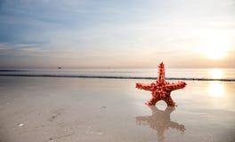 Estrellas de mar en el frente al mar Fotografía de archivo