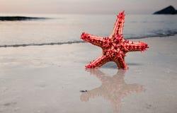 Estrellas de mar en el frente al mar Fotos de archivo libres de regalías