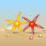 Estrellas de mar en el mar Foto de archivo libre de regalías