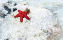 Estrellas de mar en el océano Fotografía de archivo libre de regalías