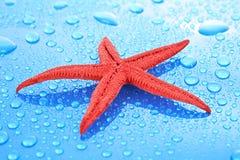 Estrellas de mar en fondo azul Imágenes de archivo libres de regalías