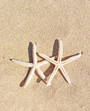 Estrellas de mar en fondo de la arena Imágenes de archivo libres de regalías