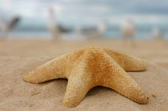 Estrellas de mar en la arena Fotos de archivo libres de regalías