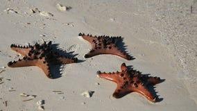Estrellas de mar en la arena de la playa metrajes