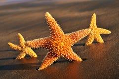 Estrellas de mar en la arena de una playa imagenes de archivo