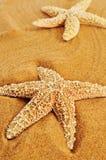 Estrellas de mar en la arena de una playa foto de archivo