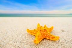 Estrellas de mar en la arena en la playa hermosa el día soleado, estrellas de mar amarillas Foto de archivo