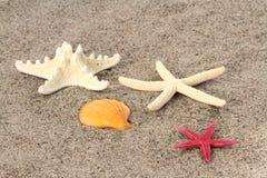 Estrellas de mar en la arena de la playa Fotos de archivo