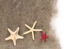 Estrellas de mar en la arena de la playa Fotografía de archivo