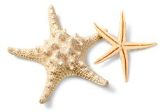 Estrellas de mar en la arena de la playa Cierre para arriba Fotos de archivo