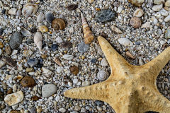 Estrellas de mar en la grava con las piedras y las cáscaras coloridas Fotos de archivo libres de regalías