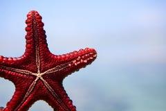 Estrellas de mar en la laguna en la playa meridional en el océano marin imagen de archivo
