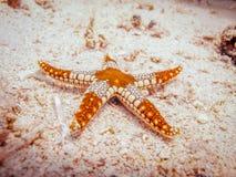 Estrellas de mar en la parte inferior del mar Imagen de archivo libre de regalías