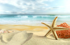Estrellas de mar en la playa foto de archivo