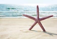 Estrellas de mar en la playa imagenes de archivo
