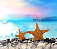 Estrellas de mar en la playa Adultos jovenes Foto de archivo