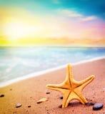 Estrellas de mar en la playa Adultos jovenes Fotos de archivo