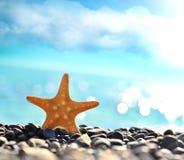 Estrellas de mar en la playa Adultos jovenes Fotografía de archivo libre de regalías
