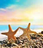Estrellas de mar en la playa Adultos jovenes Imágenes de archivo libres de regalías