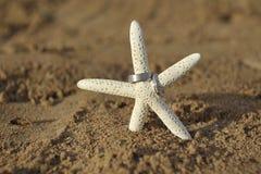 Estrellas de mar en la playa arenosa con dos alianzas de boda Fotografía de archivo