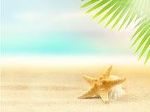 Estrellas de mar en la playa arenosa y la hoja de palma Fotos de archivo libres de regalías