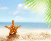 Estrellas de mar en la playa arenosa y la hoja de palma Foto de archivo libre de regalías
